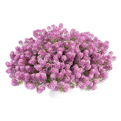 Lobularia Lilac Stream / Illatos ternye vagy mézvirág