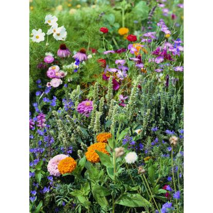 "Childrens - Butterfly Mixture / ""Pillangó-legelő"" virágkeverék, gyerekeknek"