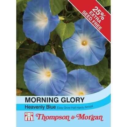 Morning Glory Heavenly Blue / Hajnalka