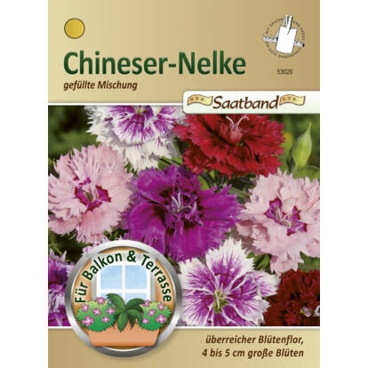 Kínai szegfű 'Gefüllte Mischung' / Dianthus chinensis