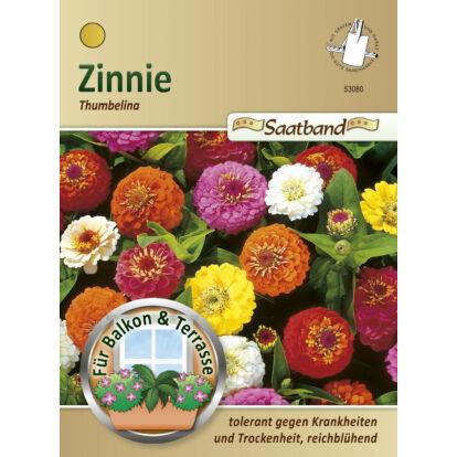 Rézvirág 'Thumbelina' alacsony növésű keverék / Zinnia elegans
