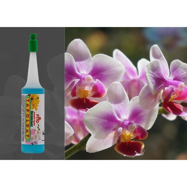 Fito önadagolós tápoldat - orchideához