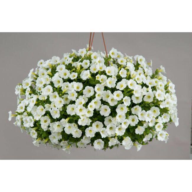 Petunia Littletunia White Grace