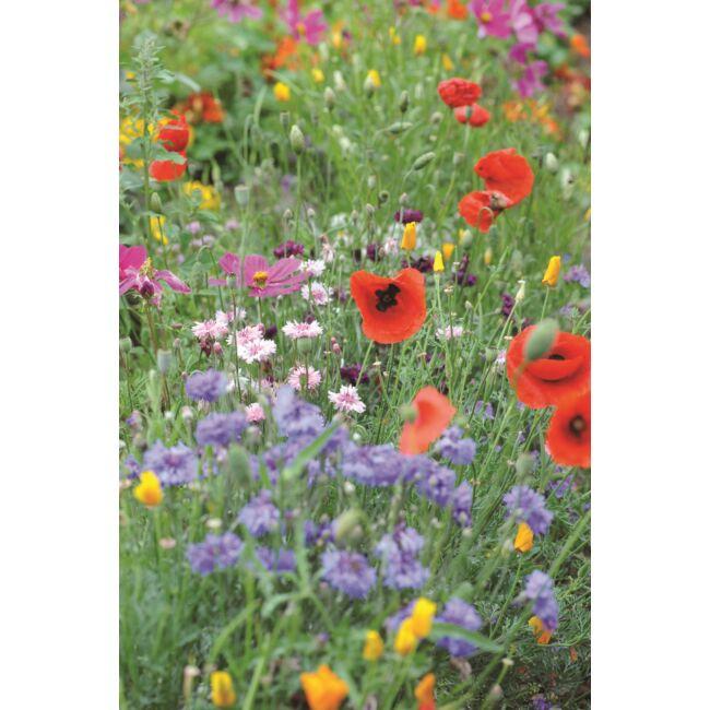 Annual Early Flowering Mixed / Korai virágzású magkeverék
