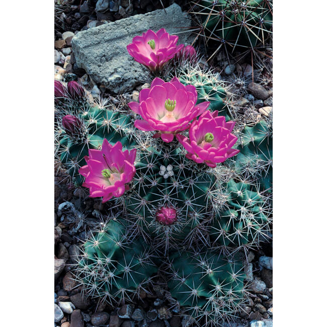Cactus Special Mixed / Kaktusz-keverék