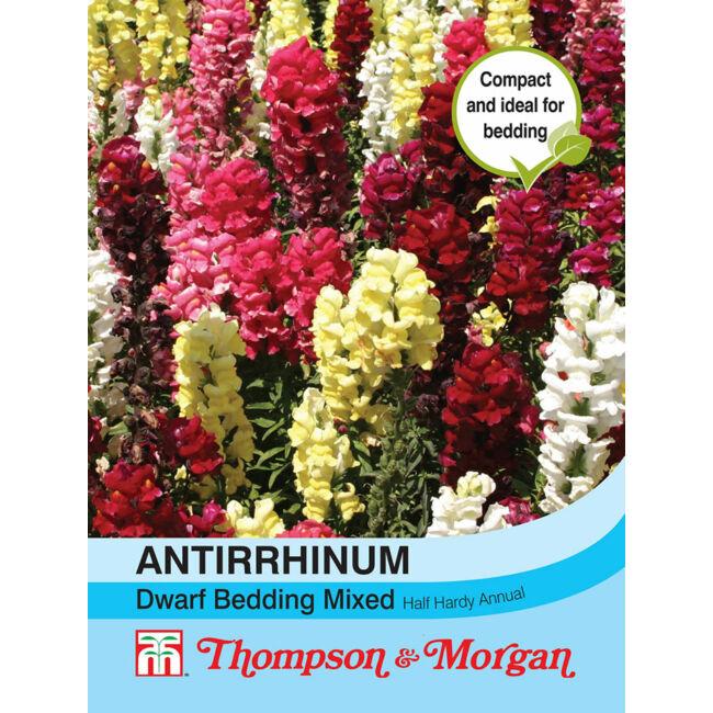 Antirrhinum Dwarf Bedding Mixed / Oroszlánszáj