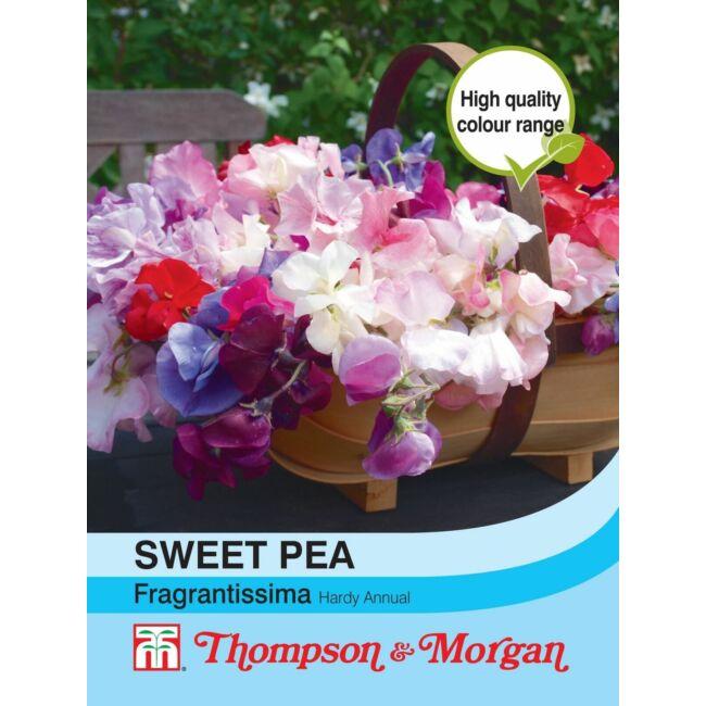 Sweet Pea Fragrantissima / Szagosbükköny