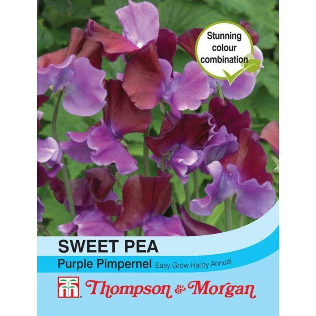 Sweet Pea Purple Pimpernel / Szagosbükköny