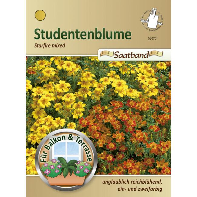 Törpe bársonyvirág 'Starfire Mixed' / Tagetes tenuifolia