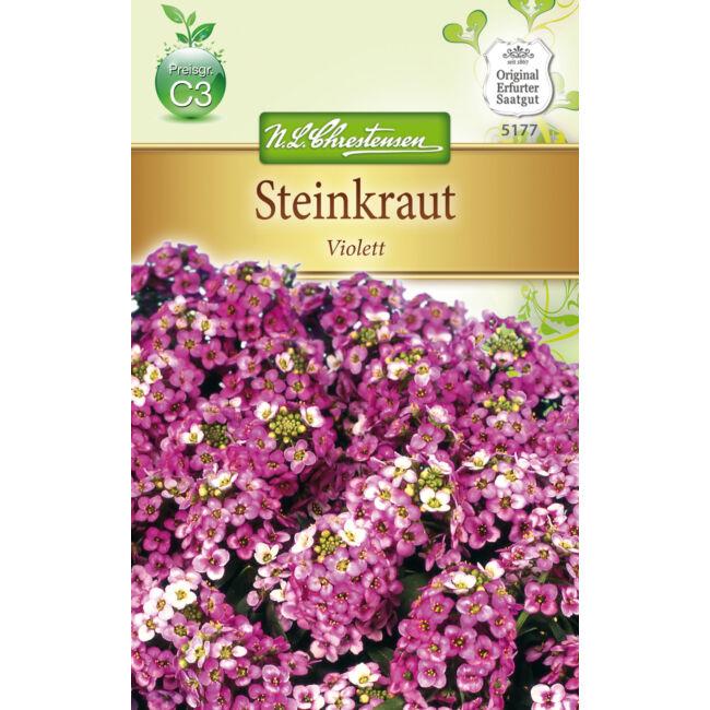 Mézvirág 'Violett' / Lobularia maritima
