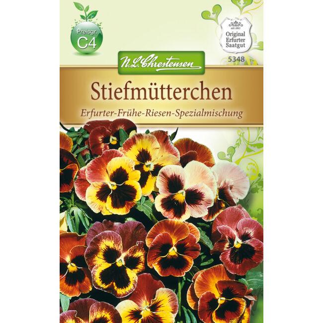 Árvácska 'Erfurter Frühe Riesen' / Viola x wittrockiana