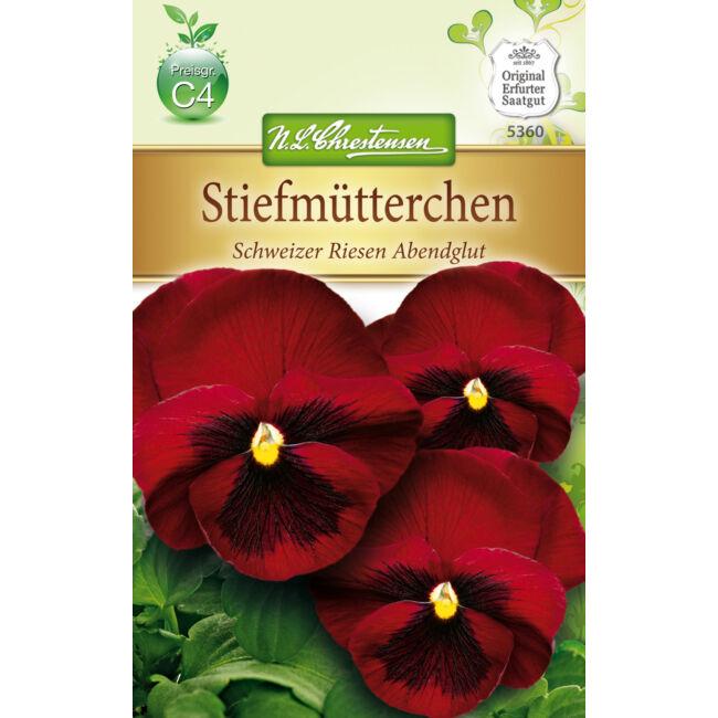 Árvácska 'Schweizer Riesen Abendglut' / Viola x wittrockiana