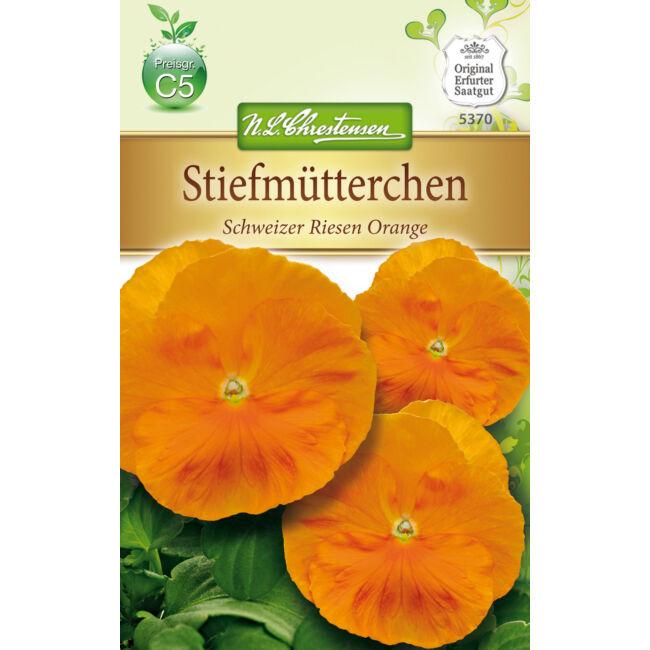 Árvácska 'Schweizer Riesen Orange' / Viola x wittrockiana