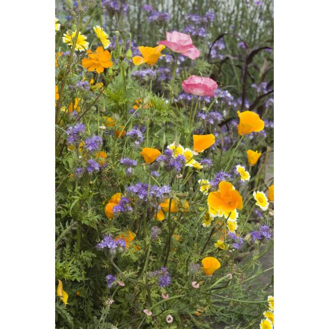 Wild Flower Honey Bee Flower Mix / Mézelő virágkeverék