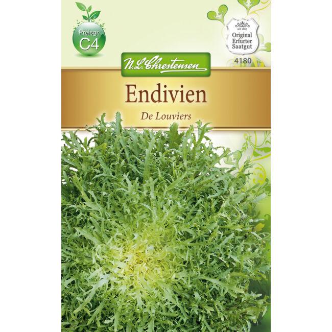 Cikóriasaláta 'De Louviers' / Cichorium endivia